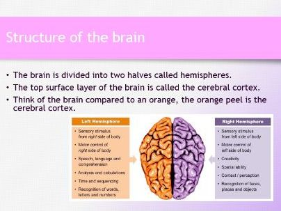 AQA GCSE Psychology - Brain and Neuropsychology Lessons 1 - 10