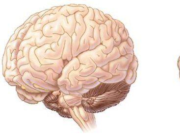 AQA GCSE Psychology 1-9 Memory COMPLETE except 'Factors Influencing Memory'