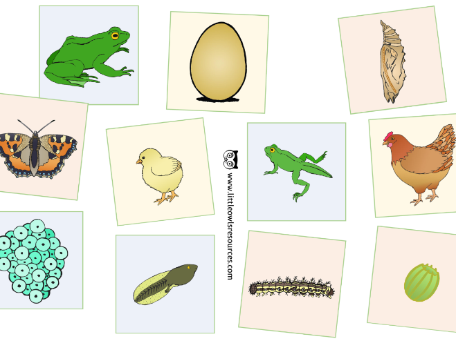 Life Cycle Picture Cards