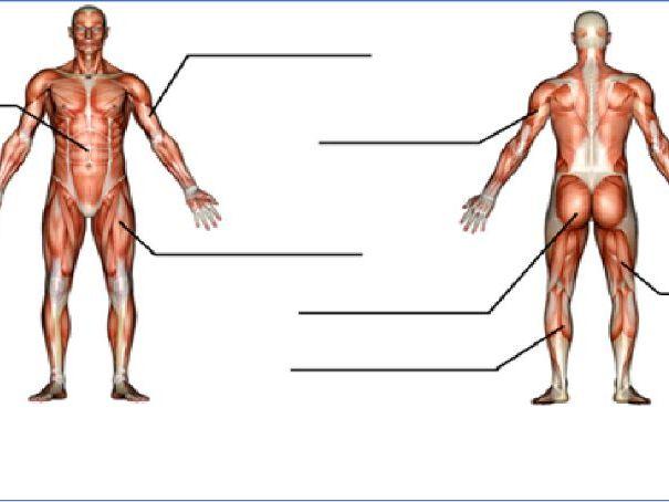 Y7 KS3 Fitness written assessment