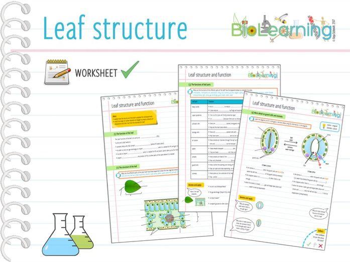 Leaf Structure Worksheet Ks3 Ks4 By Anjacschmidt