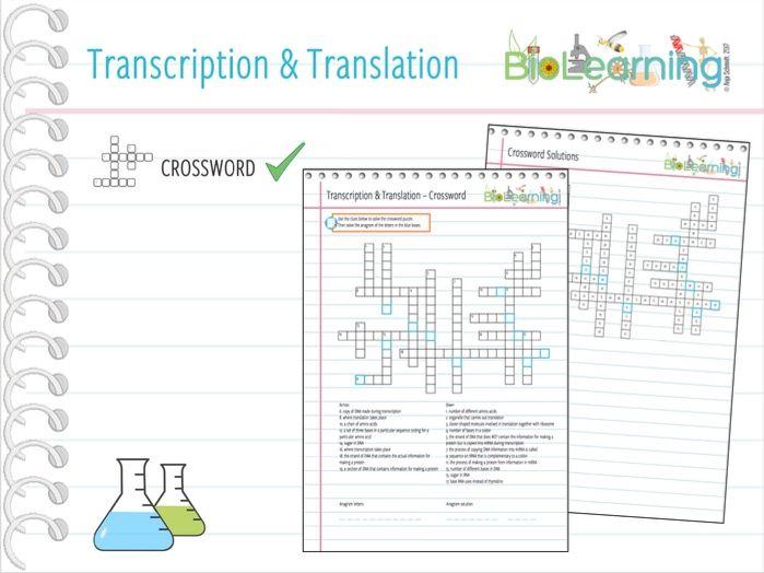 Transcription and translation - Crossword (KS4/KS5)