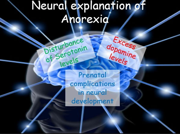 Eating Behaviour: Biological explanation of Anorexia (Psychology AQA A)