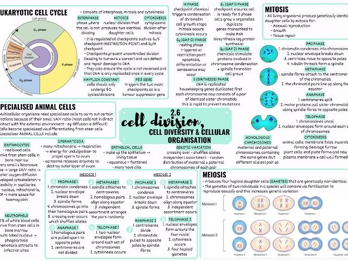 OCR ALEVEL BIOLOGY CELL DIVISION, DIVERSITY & DIFFERENTIATION