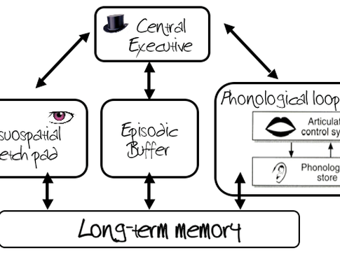 A Level Psychology Working Memory Model Pack