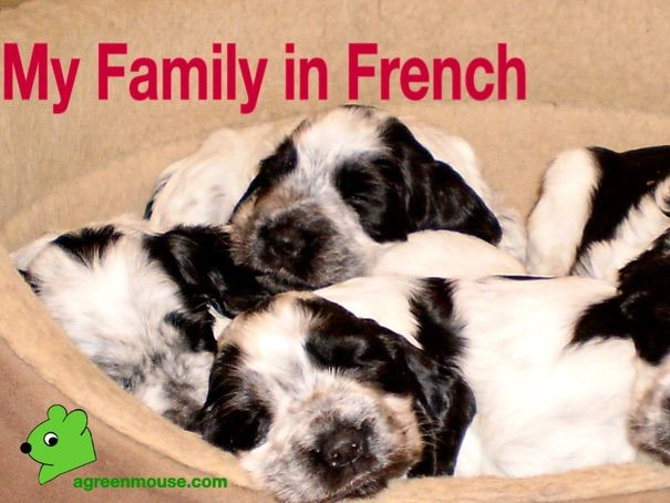 My Family in French - Vocabulary, Video clip + Story