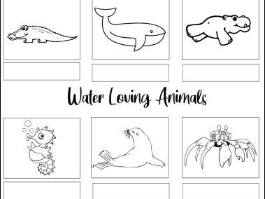 Water Loving Animals Worksheets