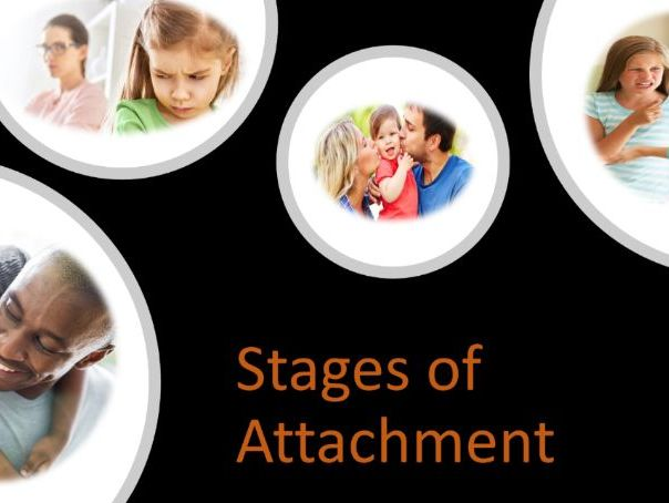 Stages of Attachment - AQA -  A Level - Psychology