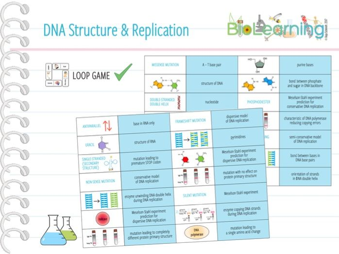 DNA structure & replication - Loop Game (KS5)