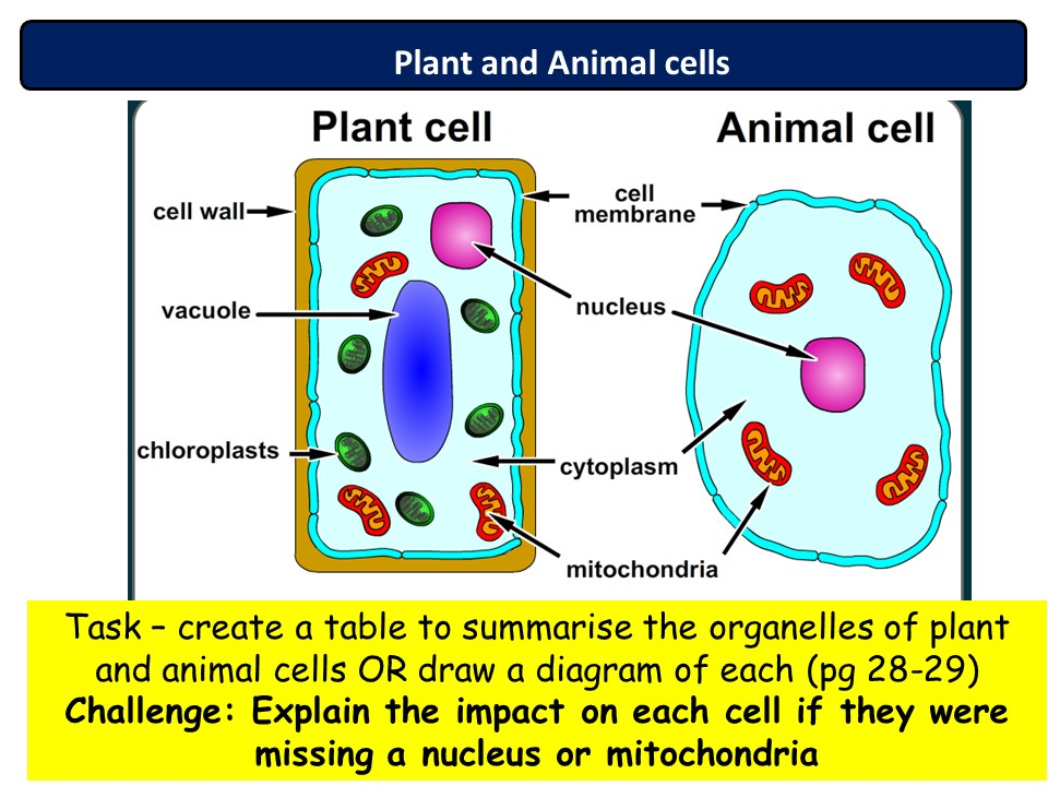 NEW AQA 2016 Biology Chapter 1 lesson 2 animal and plant cell theory lesson