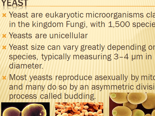 yeast anaerobic respiration
