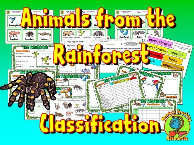 Animals from the Rainforest - Classification