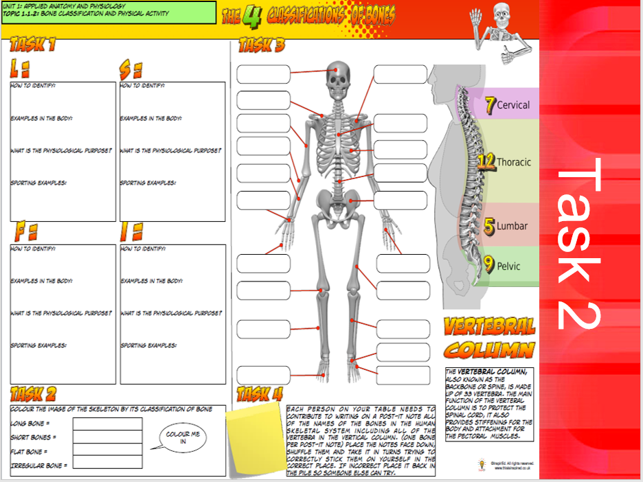 GCSE PE - Component 1 - Applied Anatomy and Physiology - Skeletal System