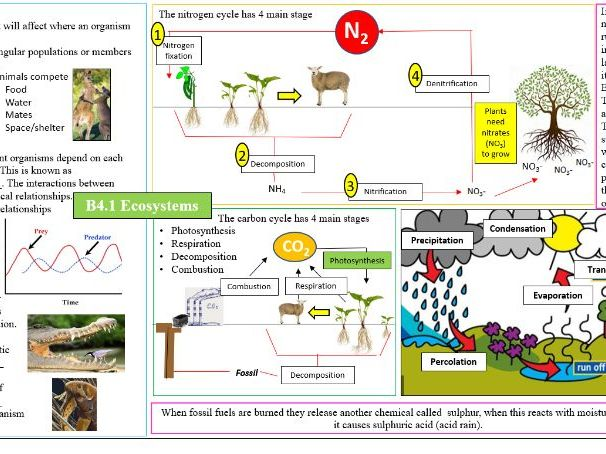 GCSE OCR Biology B4 ECOSYSTEMS - Revision poster
