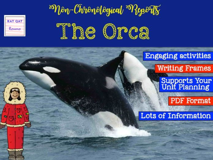 The Killer Whale / Orca  Non-chronological Report Writing