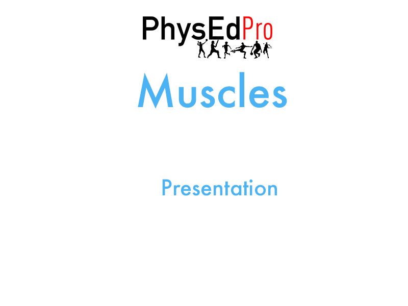 GCSE PE – Muscles – Location, Function and Role – Powerpoint Presentation – IGCSE