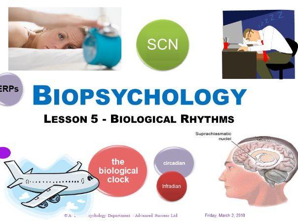Powerpoint - Biopsychology - Lesson 5 - Biological Rhythms