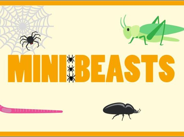 Minibeasts Classroom Banner