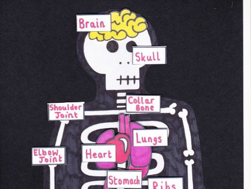 Label the skeleton activity - human body key stage one/two