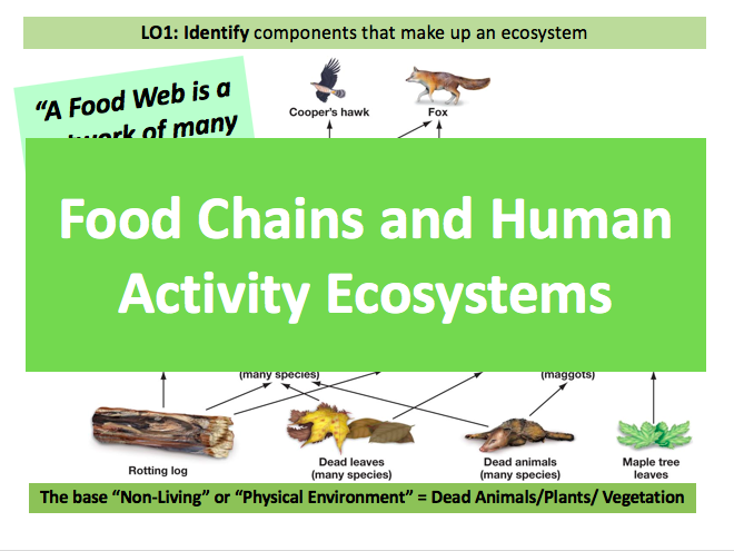 Food Chains and Human Activity! Ecosystems