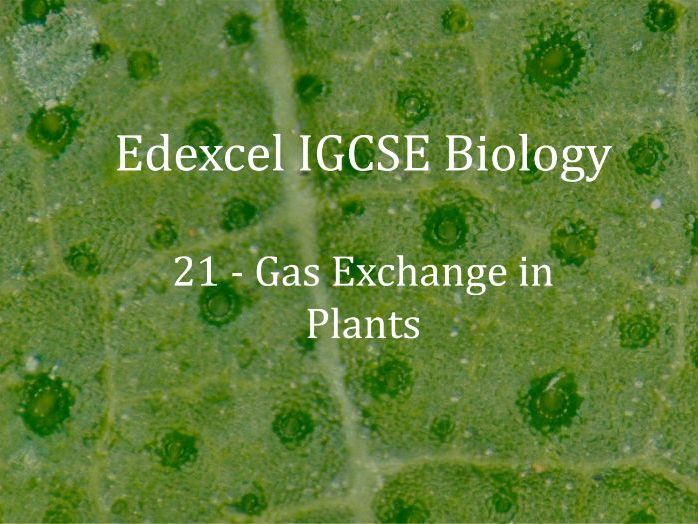 Edexcel IGCSE Biology Lecture 21 - Gas Exhange in Plants