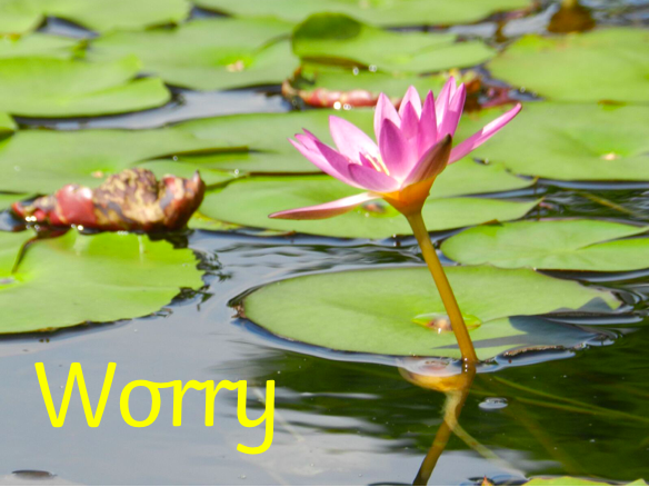 Worry: Primary Mindfulness and Wellbeing through real stories.