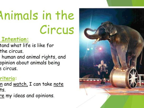 Animals in the Circus
