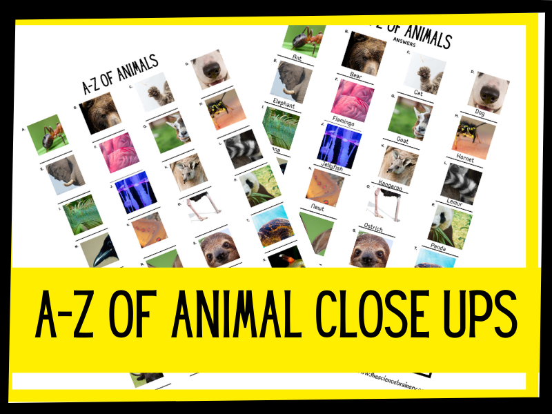 A-Z of animal close ups