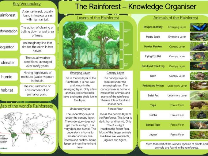 The Rainforest Knowledge Organiser