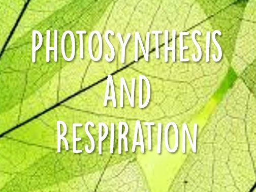 A LEVEL BIOLOGY: PHOTOSYNTHESIS AND RESPIRATION