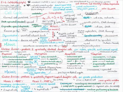 OCR A Level Biology Cell Division Revision Poster