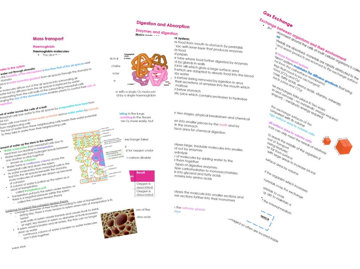 AQA A LEVEL Biology notes on 'EXCHANGE + TRANSPORT' for NEW 7402 SPEC