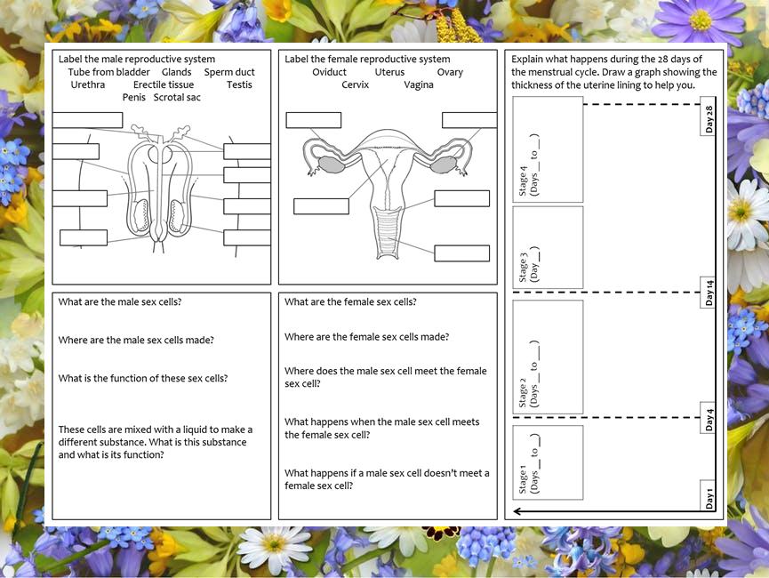 KS3 Reproductive systems and menstrual cycle revision mat