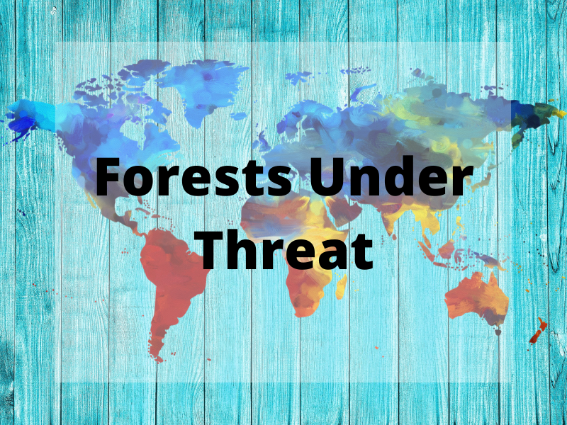 GCSE Geography Edexcel B - Personalised Learning Checklist (PLC) - Forests Under Threat