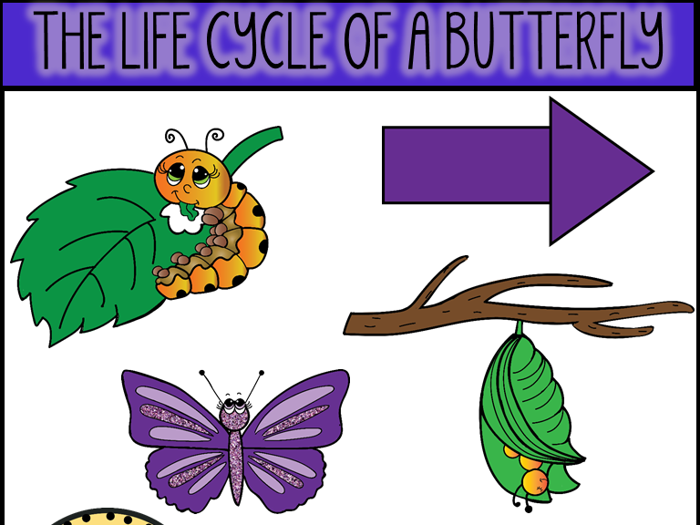 Life Cycle of A Butterfly Clip Art