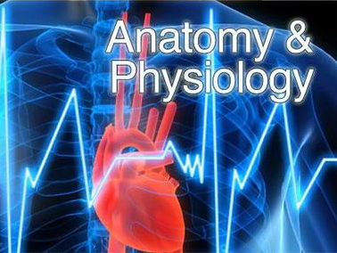 NEW GCSE PE - Applied Anatomy & Physiology - full package!