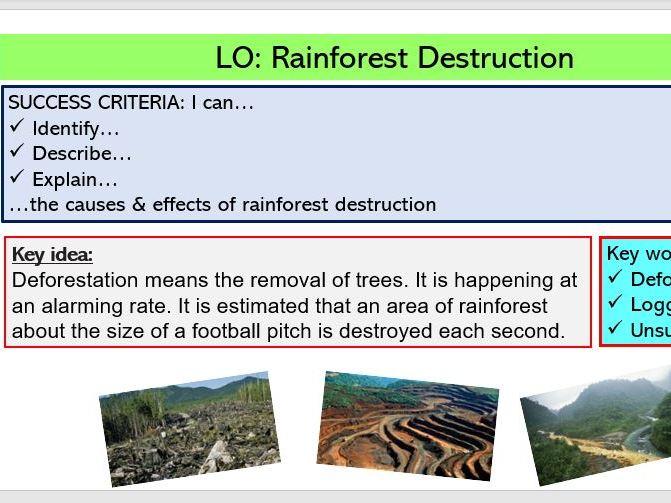 L5. Rainforest Destruction