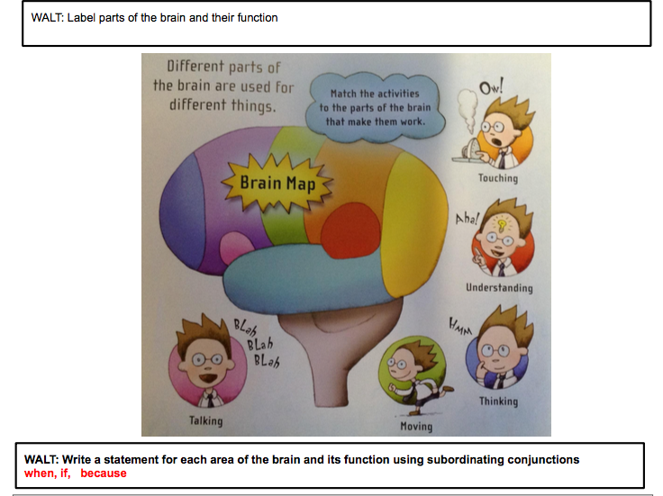 Brains Year 2 English planning.  Human body part full 8 lesson planning with full detailed resources