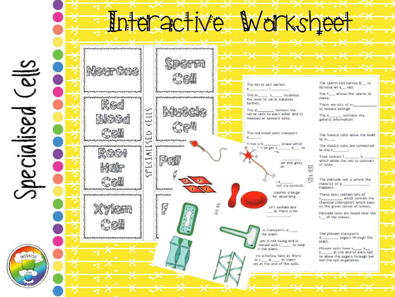Specialised cells interactive worksheet