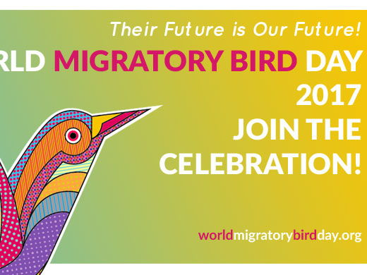 Bird Migration.  A presentation on migration & a PPT with various craft, literacy and numeracy ideas