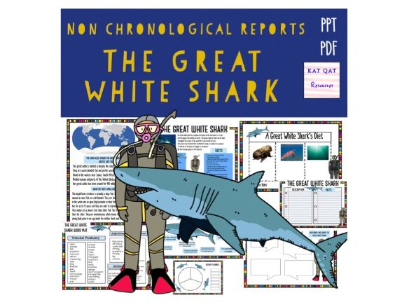 Great White Shark Non Chronological Report