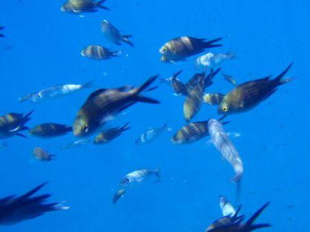 Under the Sea - Sotto il Mare