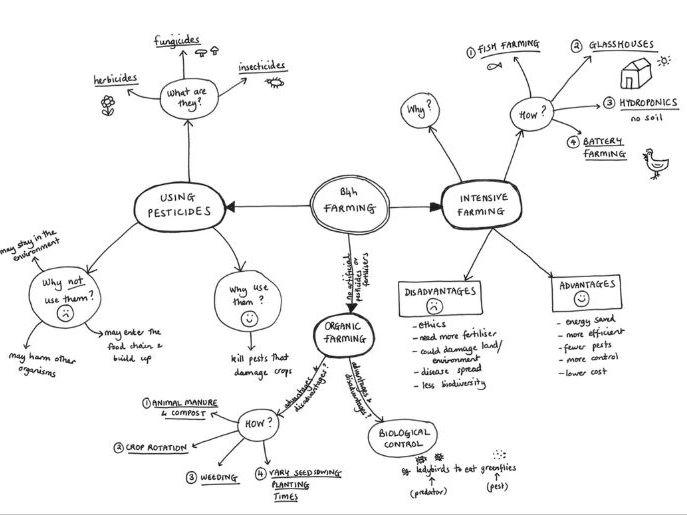 b4 biology essay