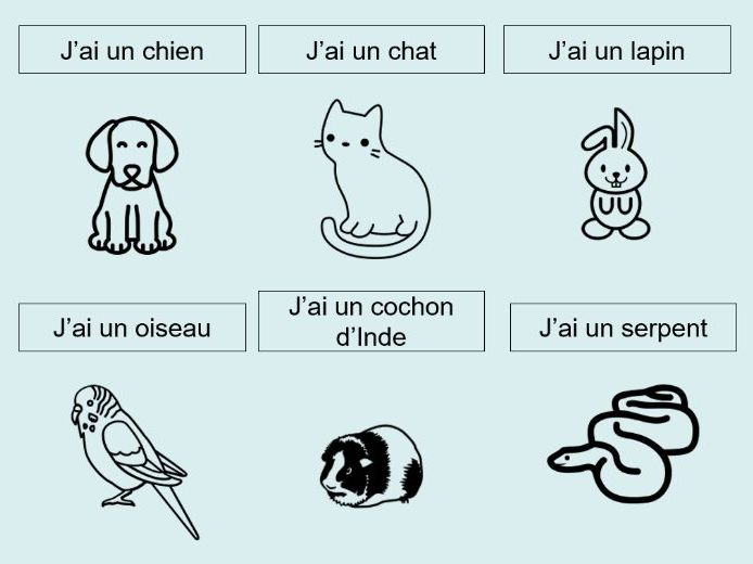 Pets Introduction French