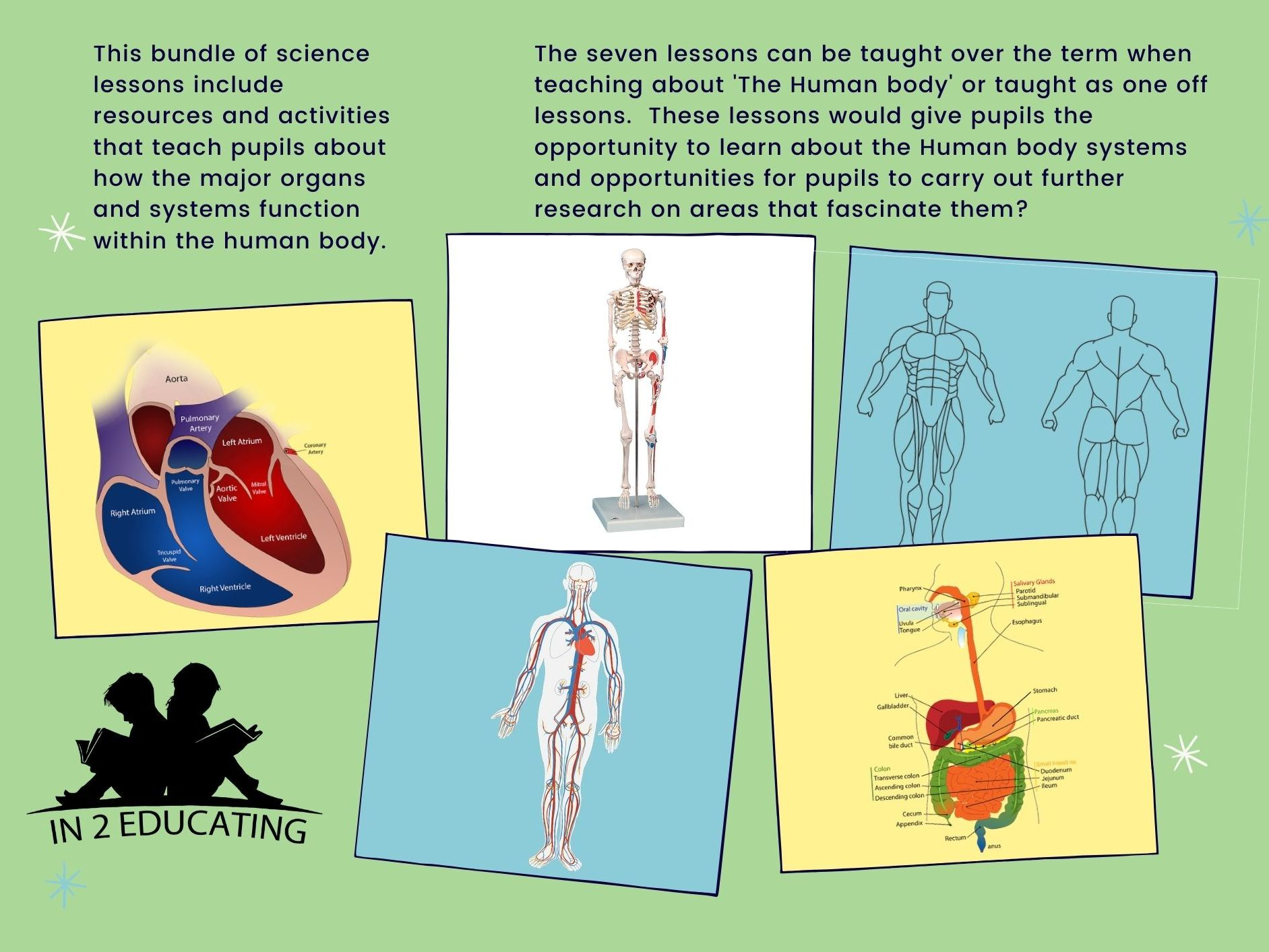 KS2  Science  Human Body Systems Bundle