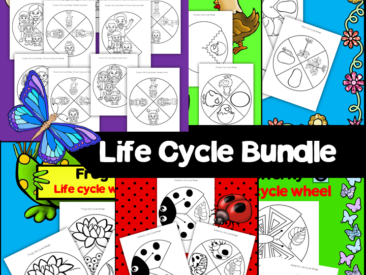 Life Cycle Wheels Bundle