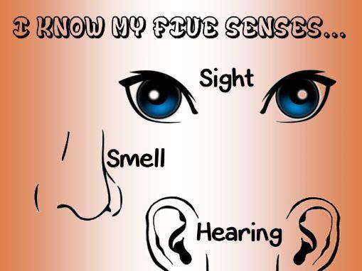 A4 poster 5 senses