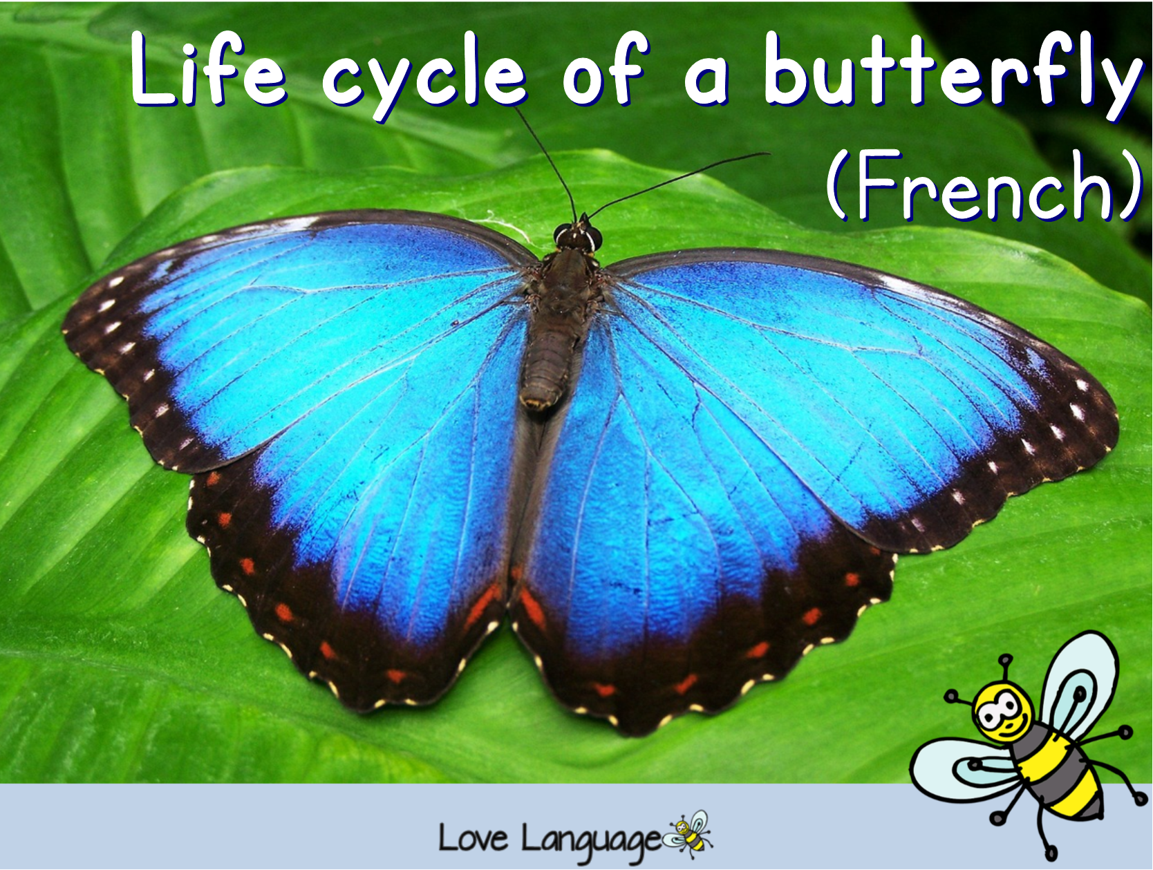 Life cycle of a butterfly in French bundle