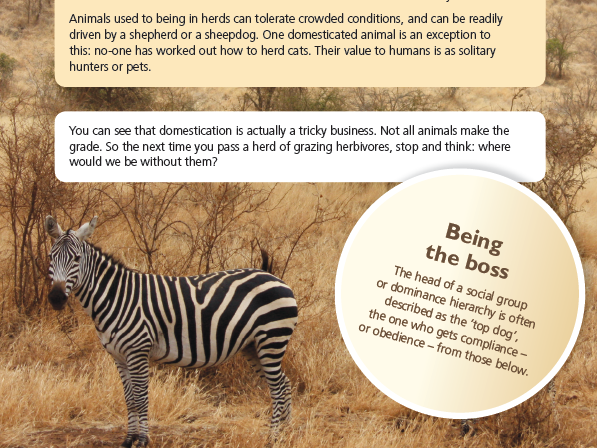 Animal Domestication Comprehension KS2