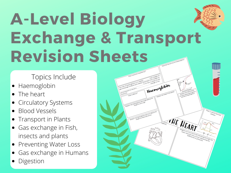 A-Level Exchange and Transport Revision sheets